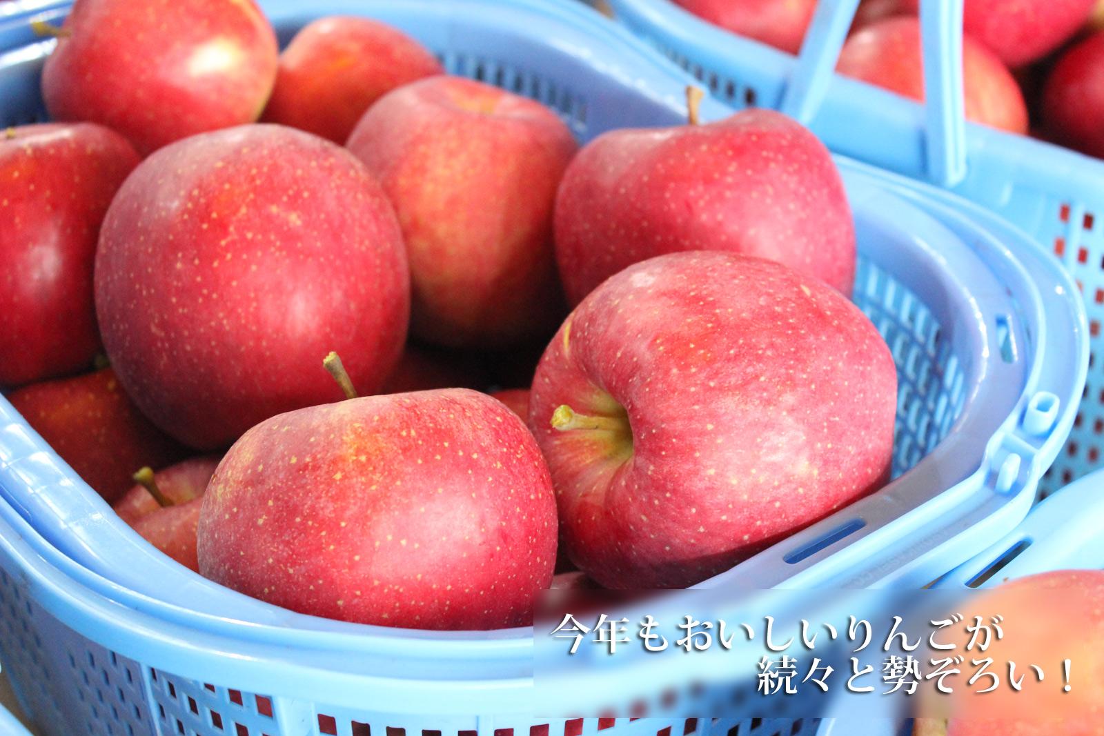 今年もおいしいりんごが続々と勢ぞろい!