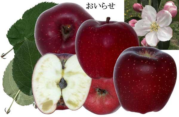 りんごの詳細については画像をクリックして下さい。