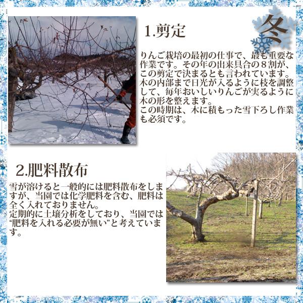 春 1.剪定りんご栽培の最初の仕事で、最も重要な作業です。その年の出来具合の8割が、この剪定で決まるとも言われています。木の内部まで日光が入るように枝を調整して、毎年おいしいりんごが実るように木の形を整えます。この時期は、木に積もった雪下ろし作業も必須です。 2.肥料散布雪が溶けると一般的には肥料散布をしますが、当園では化学肥料を含む、肥料は全く入れておりません。定期的に土壌分析をしており、当園では