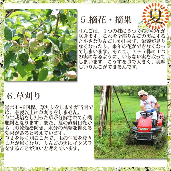 夏 5.りんごは、1つの株に5つくらいの花が咲きます。これを全部りんごの実にすると小さなりんごしか出来ず、栄養が足りなくなったり、来年の花ができなくなってしまいます。そこで、3~5株に1つの実になるように、いらない実を取ってしまいます。こうする事で大きく、美味しいりんごができるんです。6.通常4~6回程、草刈りをしますが当園では、必要以上に草刈りをしません。 草生栽培をし刈った草が分解されて有機肥料となります。また、夏の直射日光から土の乾燥を防ぎ、水分の蒸発を抑える効果があると考えています。