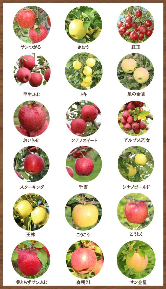 まさひろ林檎園のりんご全種類一覧