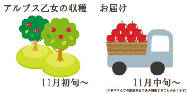 アルプス乙女の収穫は11月初旬〜お届けは11月中旬〜を予定しております。(天候やりんごの熟成具合で多少前後することがあります)