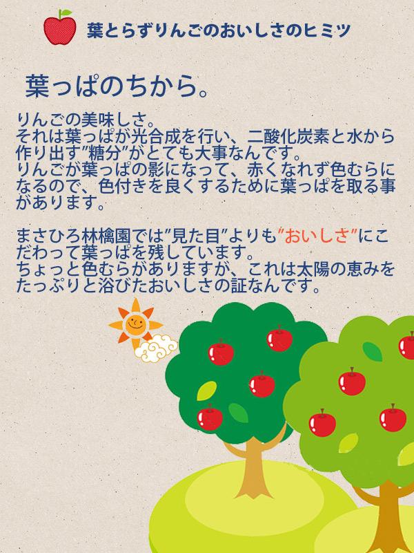 """葉とらずりんごのおいしさのヒミツ 葉っぱのちから りんごの美味しさ。それは葉っぱが光合成を行い、二酸化炭素と水から作り出す""""糖分""""がとても大事なんです。りんごが葉っぱの影になって、赤くなれず色むらになるので、色付きを良くするために葉っぱを取る事があります。まさひろ林檎園では""""見た目""""よりも""""おいしさ""""にこだわって葉っぱを残しています。ちょっと色むらがありますが、これは太陽の恵みをたっぷりと浴びたおいしさの証なんです。"""