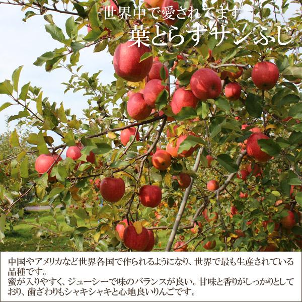 世界中で愛されています 葉とらずサンふじ 中国やアメリカなど世界各国で作られるようにあり、世界で最も生産されている品種です。蜜が入りやすく、ジューシーで味のバランスが良い。甘味と香りがしっかりとしており、歯ざわりもシャキシャキと心地良いりんごです。