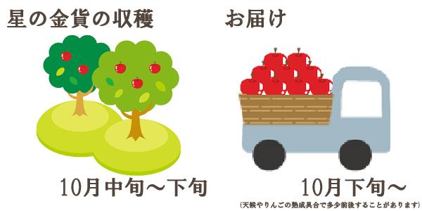星の金貨の収穫は10月中旬〜下旬お届けは10月下旬〜を予定しております。(天候やりんごの熟成具合で多少前後することがあります)