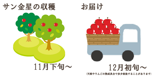 サン金星の収穫は11月下旬〜お届けは12月初旬〜を予定しております。(天候やりんごの熟成具合で多少前後することがあります)