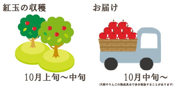 紅玉の収穫は10月上旬〜中旬お届けは10月中旬〜を予定しております。(天候やりんごの熟成具合で多少前後することがあります)