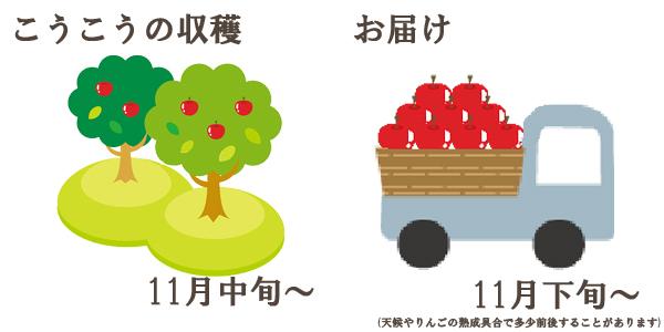 こうこうの収穫は11月中旬〜お届けは11月下旬〜を予定しております。(天候やりんごの熟成具合で多少前後することがあります)