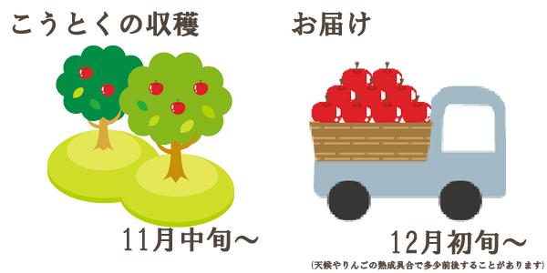こうとくの収穫は11月中旬〜お届けは12月初旬〜を予定しております。(天候やりんごの熟成具合で多少前後することがあります)