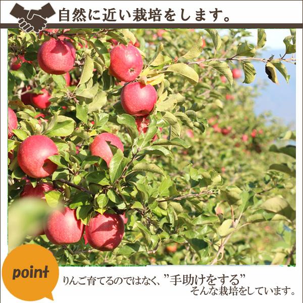 """自然に近い栽培をします。りんごを育てるのではなく、""""手助けをする""""そんな栽培をしています。"""