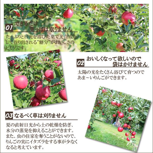 """1.できるだけ葉っぱは取りません。たっぷりと日光を浴びた葉で光合成をして作り出される""""糖分""""がおいしさのヒミツです。2.おいしくなって欲しいので袋はかけません。太陽の光をたくさん浴びて育つので、あま〜いりんごができます。3.なるべく草は刈りません。夏の直射日光から土の乾燥を防ぎ、水分の蒸発を抑えることができます。また、虫の住家を奪うことがないので、りんごの実にイタズラをする事が少なくなると考えています。"""