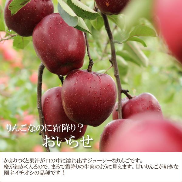 りんごなのに霜降り?おいらせ かぶりつくと果汁が口の中に溢れ出すジューシーなりんごです。蜜が細かく入るので、まるで霜降りの牛肉のように見えます。甘いりんごがすきな園主イチオシの品種です!