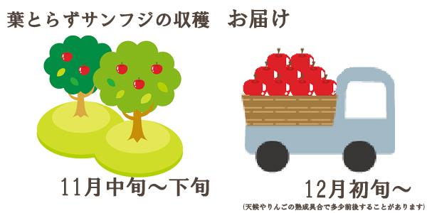 葉とらずサンふじの収穫は11月中旬〜下旬お届けは12月初旬〜を予定しております。(天候やりんごの熟成具合で多少前後することがあります)
