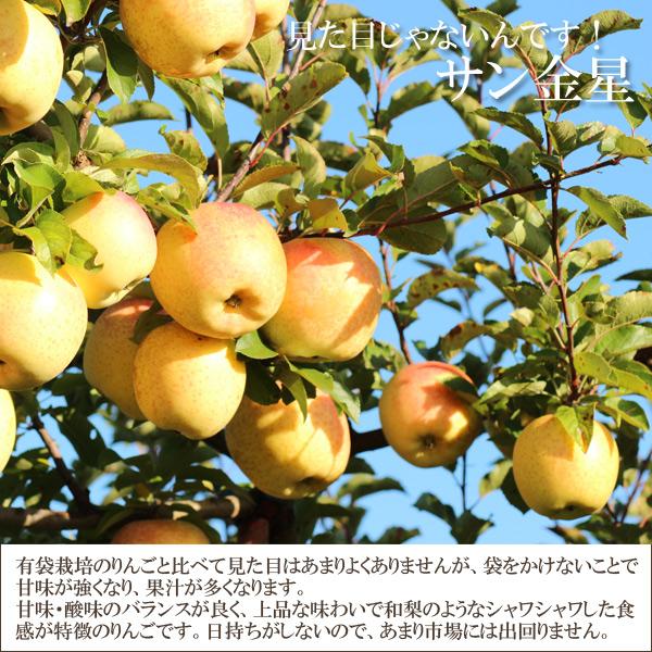 見た目じゃないんです!サン金星 有袋栽培のりんごと比べて見た目はあまりよくありませんが、袋をかけないことで甘味が強くなり、果汁が多くなります。甘味・酸味のバランスが良く、上品な味わいで和梨の様なシャワシャワした食感が特徴のりんごです。日持ちがしないので、あまり市場には出回りません。