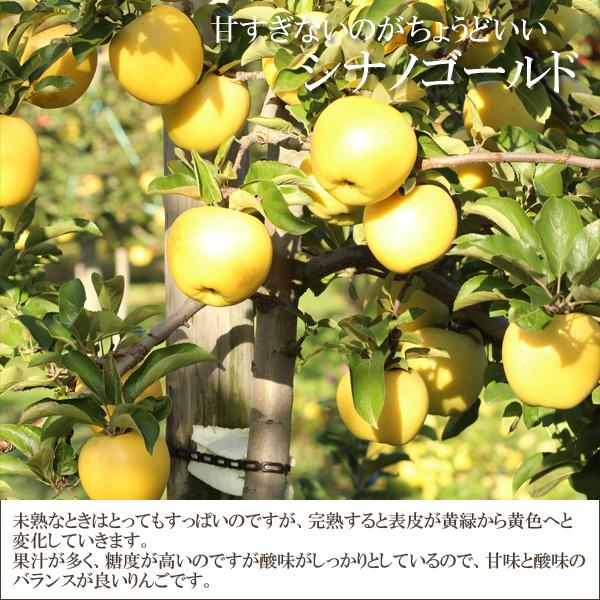 甘すぎないのがちょうどいい シナノゴールド 未熟なときはとってもすっぱいのですが、完熟すると表皮が黄緑から黄色へと変化していきます。果汁が多く、糖度が高いのですが酸味がしっかりとしているので、甘味と酸味のバランスが良いりんごです。