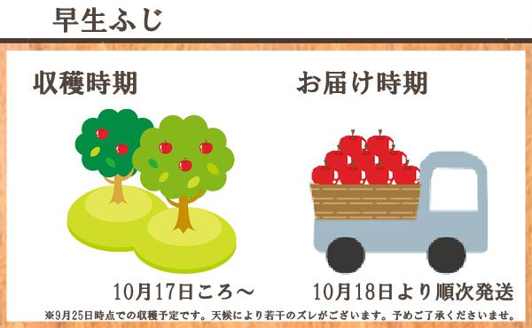 早生ふじ 収穫時期/10月17日ころ~ お届け時期/10月18日より順次発送 ※9月25日時点での収穫予定です。天候により若干のズレがございます。予めご了承くださいませ。