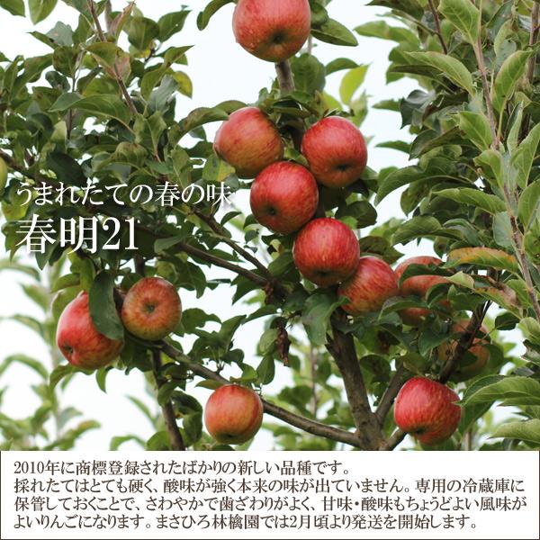 うまれたての春の味 春明21 2010年い商標登録されたばかりの新しい品種です。採れたてはとても硬く、酸味が強く本来の味が出ていません。専用の冷蔵庫に保管しておくことで、さわやかで歯ざわりが良く、甘味・酸味も丁度よい風味がよいりんごになります。まさひろ林檎園では2月頃より発送を開始します。
