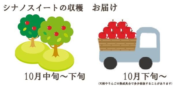 シナノスイートの収穫は10月中旬〜下旬お届けは10月下旬〜を予定しております。(天候やりんごの熟成具合で多少前後することがあります)