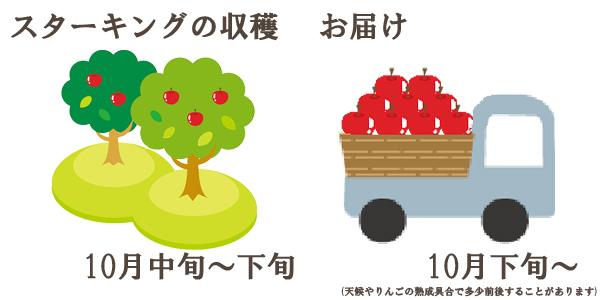 スターキングの収穫は10月中旬〜下旬お届けは10月下旬〜を予定しております。(天候やりんごの熟成具合で多少前後することがあります)