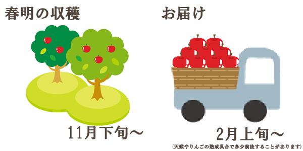 春明の収穫は11月下旬〜お届けは2月上旬〜を予定しております。(天候やりんごの熟成具合で多少前後することがあります)