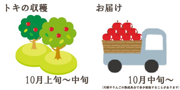 トキの収穫は10月上旬〜中旬お届けは10月中旬〜を予定しております。(天候やりんごの熟成具合で多少前後することがあります)