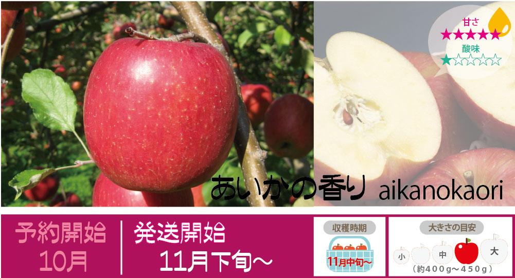 あいかの香りは、糖蜜が霜降り上に入り甘味が非常に強くとてもジューシーなりんごです。香りもよく大玉で日持ちがよいのが特徴です。 あいかの香りの収穫は11月中旬〜お届けは11月下旬〜を予定しております。(天候やりんごの熟成具合で多少前後することがあります)