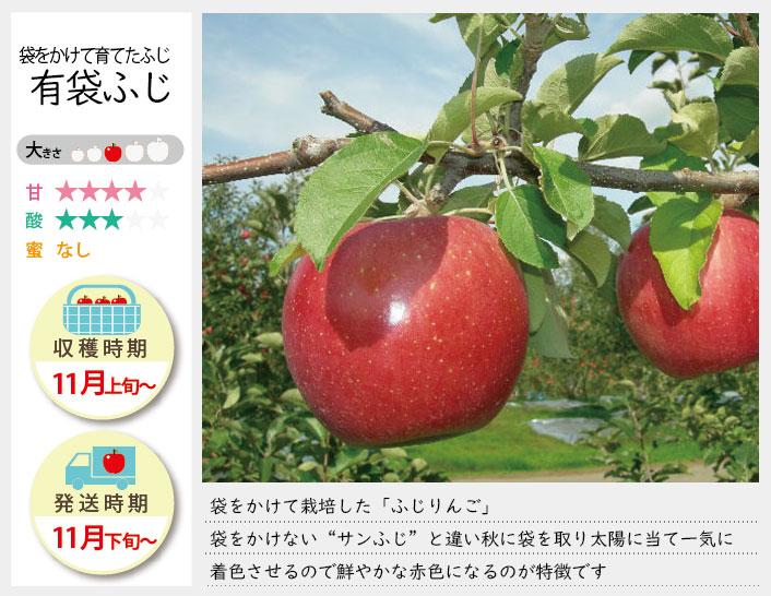 袋をかけて育てた「ふじりんご」。有袋ふじの収穫は11月上旬〜お届けは11月下旬〜を予定しております。(天候やりんごの熟成具合で多少前後することがあります)