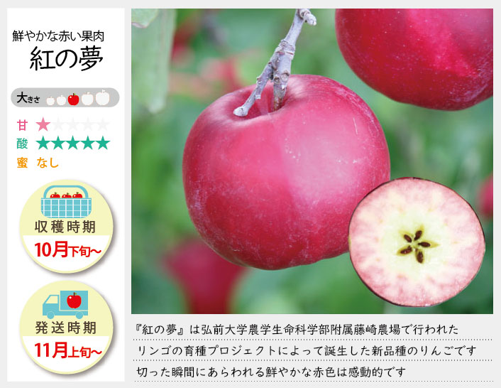 鮮やかな赤い果肉のりんご。生食・調理用におすすめ。 紅の夢の収穫は10月下旬〜お届けは11月上旬〜を予定しております。(天候やりんごの熟成具合で多少前後することがあります)