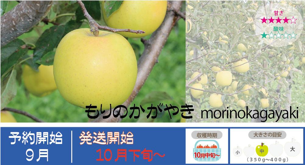 もりのかがやきは、芳香があり歯触りが良く噛むと甘い果汁が口の中に広がります。 もりのかがやきの収穫は10月中旬〜お届けは10月下旬〜を予定しております。(天候やりんごの熟成具合で多少前後することがあります)