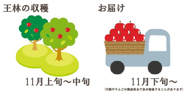 王林の収穫は11月上旬〜中旬お届けは11月下旬〜を予定しております。(天候やりんごの熟成具合で多少前後することがあります)