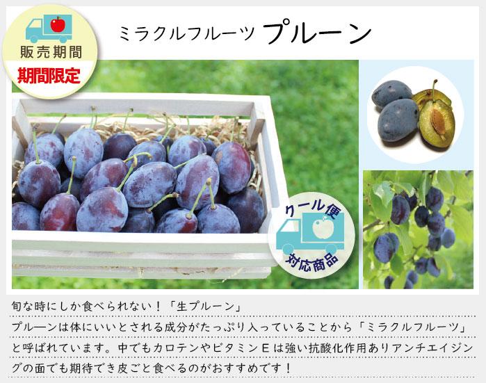 生のプルーンは一年のうちで少しの期間しか食べることができない季節の果物です。ぜひ味わってみてください。