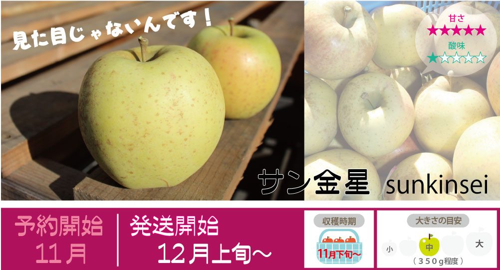 サン金星は、甘みが強く非常に果汁が多くて和梨のようなシャワシャワした食感が特徴です。日持ちがしないため市場にあまり出回らない希少なりんごです。 サン金星の収穫は11月下旬〜お届けは12月上旬〜を予定しております。(天候やりんごの熟成具合で多少前後することがあります)