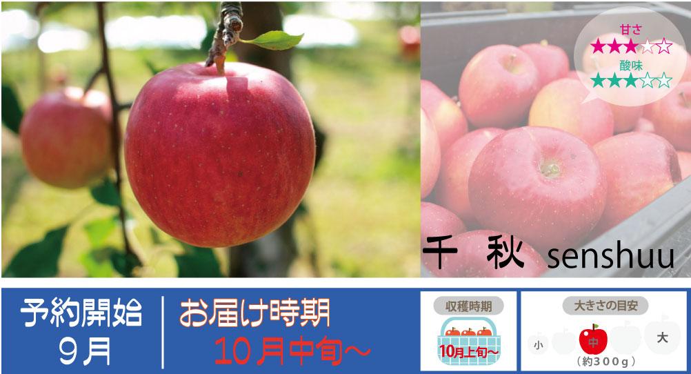 果汁が豊富で甘さと酸味のバランスがよいりんごです。 千秋の収穫は10月中旬〜お届けは10月中旬〜を予定しております。(天候やりんごの熟成具合で多少前後することがあります)