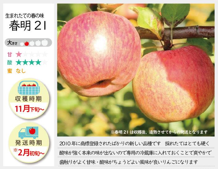うまれたての春の味 春明21 2010年い商標登録されたばかりの新しい品種です。採れたてはとても硬く、酸味が強く本来の味が出ていません。専用の冷蔵庫に保管しておくことで、さわやかで歯ざわりが良く、甘味・酸味も丁度よい風味がよいりんごになります。まさひろ林檎園では2月頃より発送を開始します。春明21の収穫時期とお届け時期。春明の収穫は11月下旬〜お届けは2月上旬〜を予定しております。(天候やりんごの熟成具合で多少前後することがあります