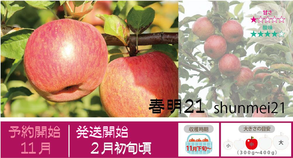 春明21は、収穫直後は果肉が硬く酸味が強くて本来の味がでません。しかし貯蔵性が非常に高く翌年の4月以降になってから果肉の硬さも適度になり酸味も和らいでおいしくなるという特徴がある品種です。 春明21の収穫は11月下旬〜お届けは2月初旬〜を予定しております。(天候やりんごの熟成具合で多少前後することがあります)