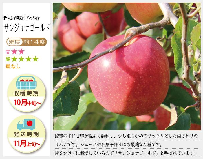 サンジョナゴールドは、酸味の中に甘味がほどよく調和し少し柔らかめでサックリとした歯触りのりんごです。サンジョナゴールドの収穫は10月中旬〜お届けは11月上旬〜を予定しております。(天候やりんごの熟成具合で多少前後することがあります)